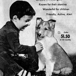Lassie by mail